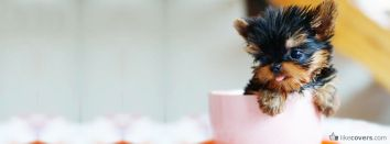 A little dog inside of a coffee cup